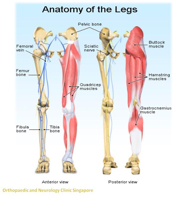 Leg pain info